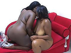 Ebony BBWs explore their every fold